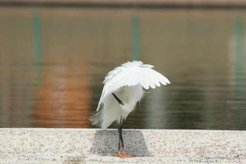 Bird Little Egret White Feathers Water Parasol