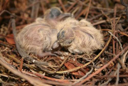 Birds Chick Newborn Bird Ave Animals Animal