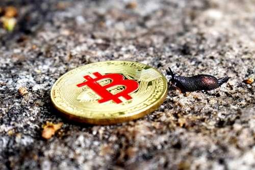 Bitcoin Slug Btc Bitcoin Snail Btc Snail Btc Slug