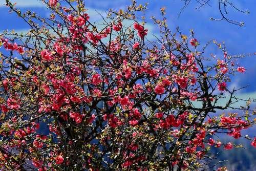 Blossom Nature Flower Garden Pink Flowers Flora