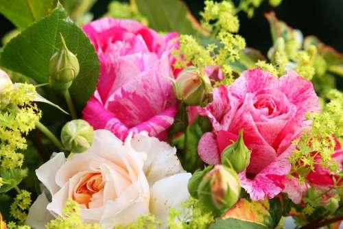 Bouquet Summer Bouquet Summer Flowers Garden