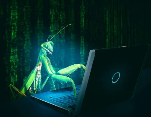 Bug Virus Computer Hack Hacking Infect Internet