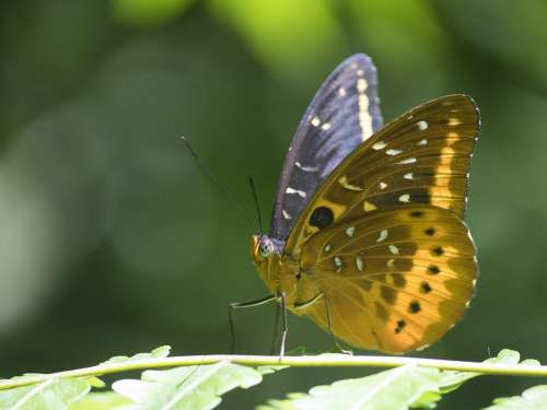 Butterfly Brown Yellow Green Nature Animal Insect