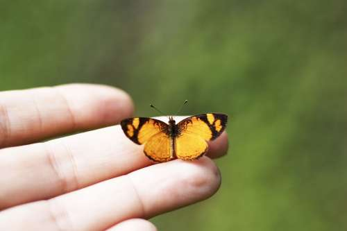 Butterfly Hand Background Girl Beautiful Nature