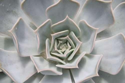 Cactus Tropical Tropics Exotic Plant Green Flora