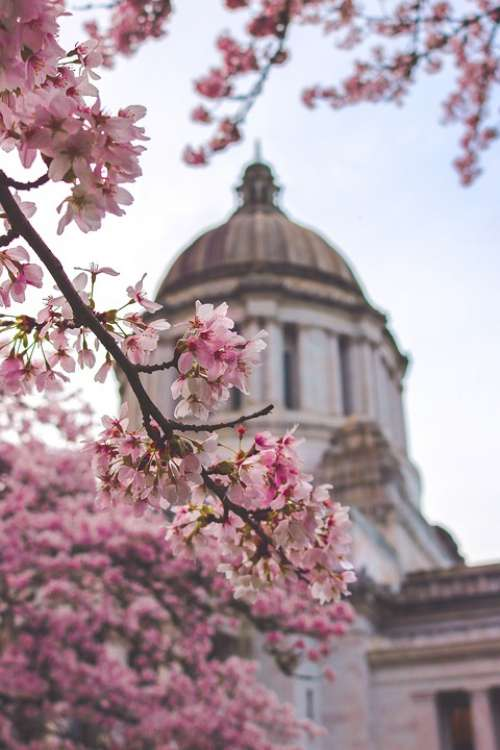 Capitol Building Washington State Spring Usa Dome