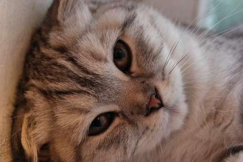 Cat Animals Feline Eyes Cute