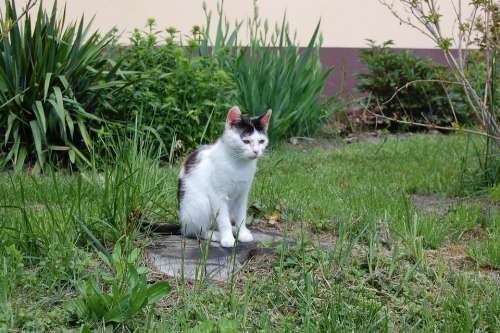 Cat Green Nature Animal