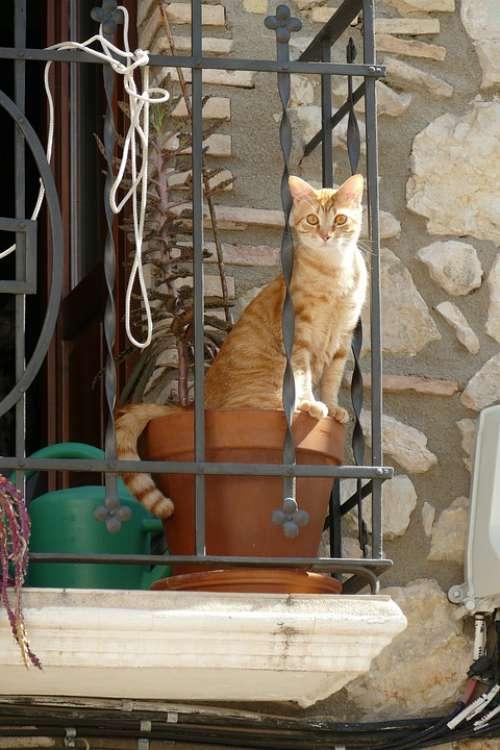 Cat Cats Pet Fauna Mammal Red White Pot