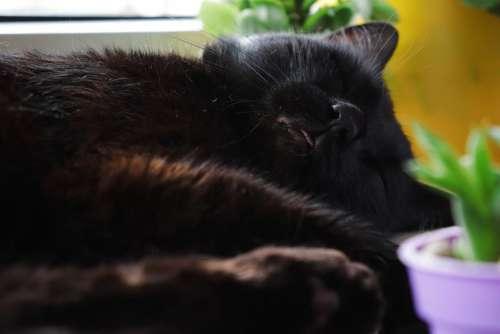 Cat Black Animals Fur Cute Cats The Language