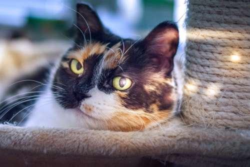 Cat Light Pet The Eyes Mustache