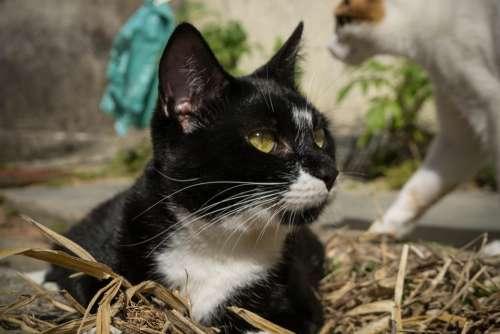 Cat Pet Domestic Animal Feline Adorable