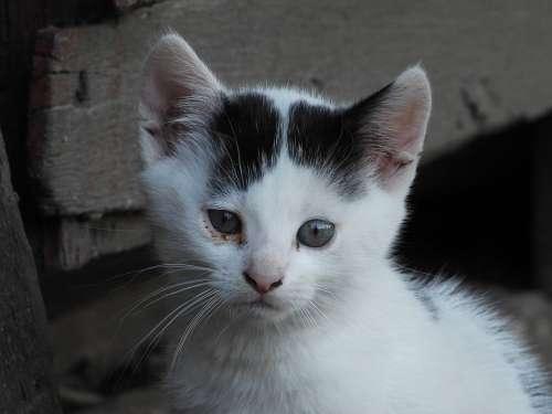 Cat Dachowiec Animal Kitten Kitty Animals Nature