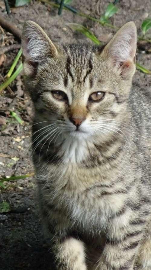Cat Kitten Animal Fauna