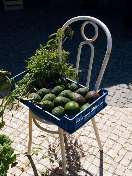 Chair Vegetable Nature Ecology Vegetables Avocado