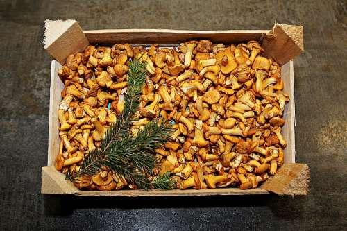 Chanterelles Eierschwammerl Mushrooms Mushroom