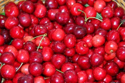 Cherries Fruit Garden Nature Harvest Dessert Red