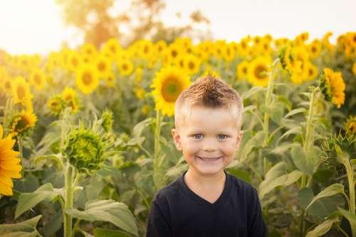 Child Sun Sunflowers Field Happy Kid Childhood