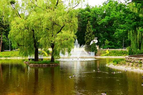 City Park Pond Willow Fountain