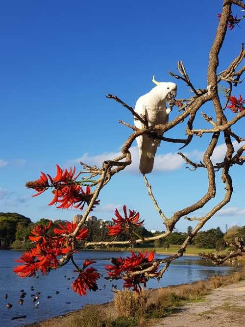 Cockatoo Bird Tree Nature Wildlife Sky Trees