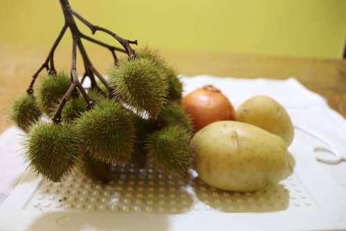 Culinary Paprika Plant Annatto The Dye Seasoning