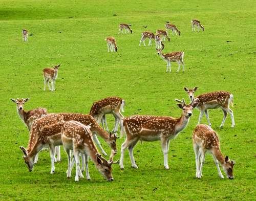 Deer Animals Wild Mammal Cute Wild World