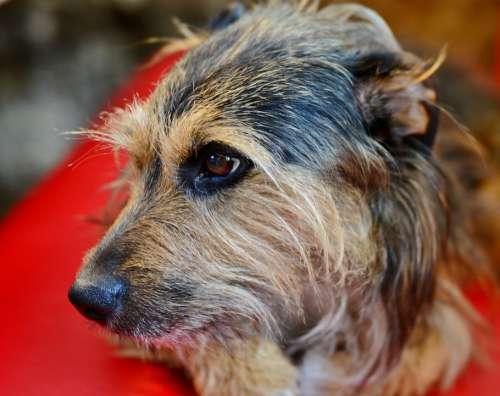 Dog Doggy Dog Head Pet Animal Cute Fur Mammal