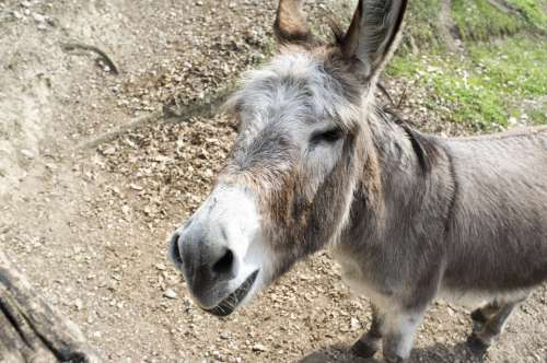 Donkey Animal Smile Farm The Mammal Smiling Cute