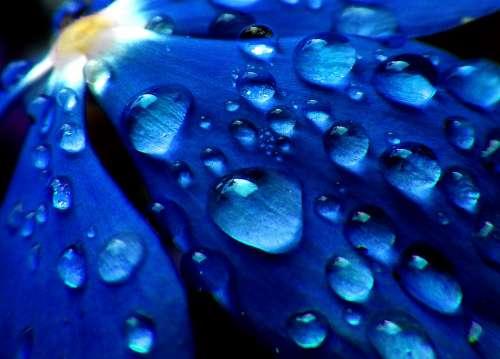 Drops Rocio Flower Petal Rain Drizzle Wet Flirty