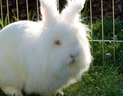 Easter Rabbit Ears White Easter Bunny Long Eared