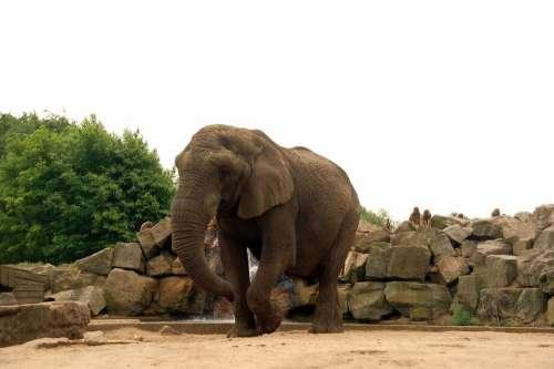 Elephant Zoo Park Nature