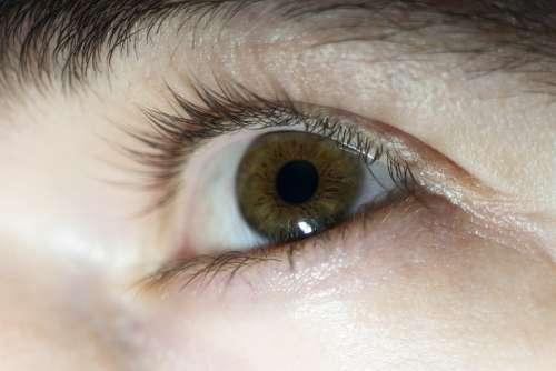 Eye Man Person Brown Eyebrow Guy