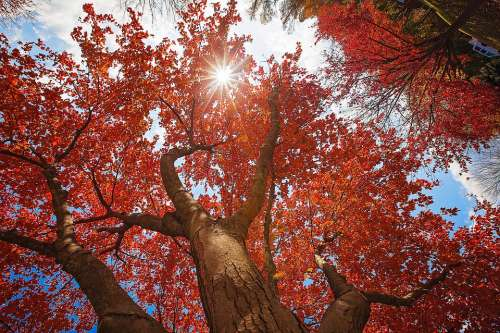Fall Tree Sky Autumn Nature Forest Leaves Trees