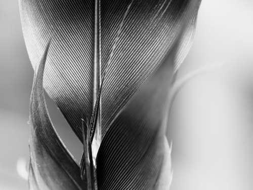 Feather Filigree Bird Feather Fluffy Slightly