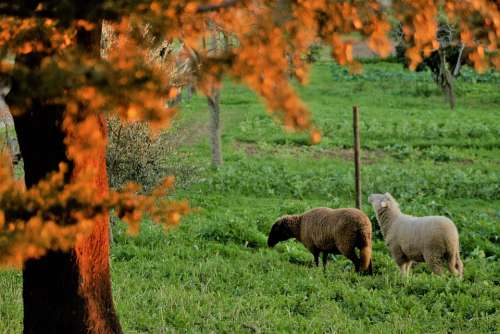 Field Herb Sheep Pasture Trees Twigs Cattle
