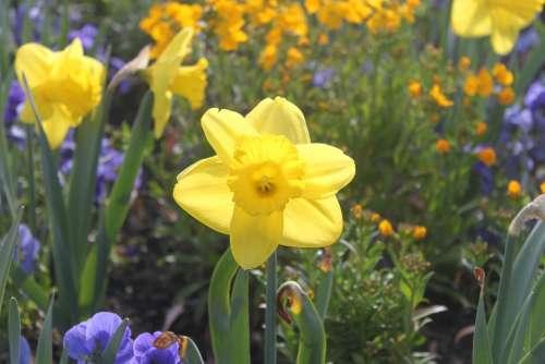 Flower Yellow Summer Spring Garden Color