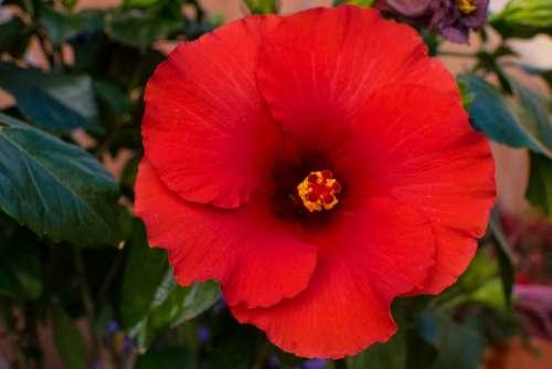 Flower Garden Petal Red Plant