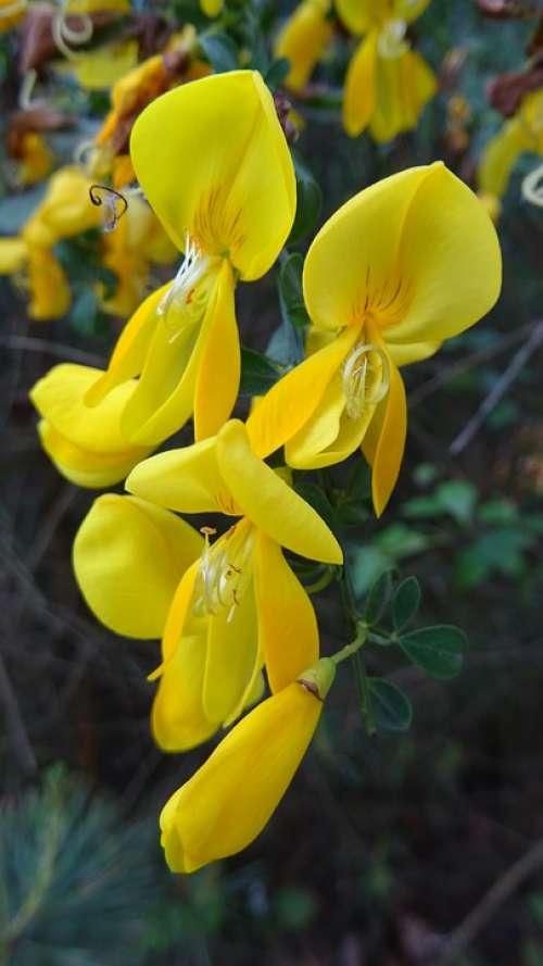 Flower Flora Macro Nature Beautiful Summer
