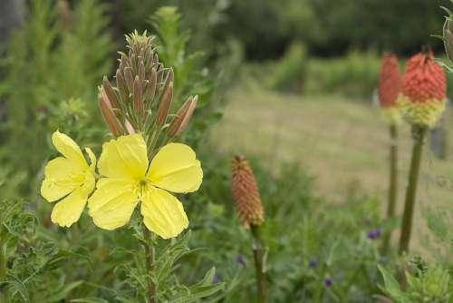 Flower Yellow Nature Petals