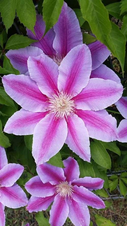 Flower Blossom Bloom Pink