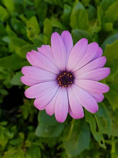 Flower Nature Green Violet Margherita