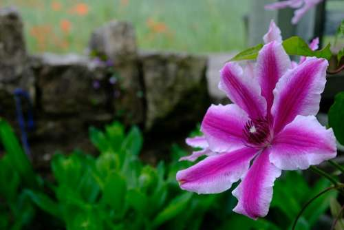 Flower Nature Bloom Plant Spring Garden Petals