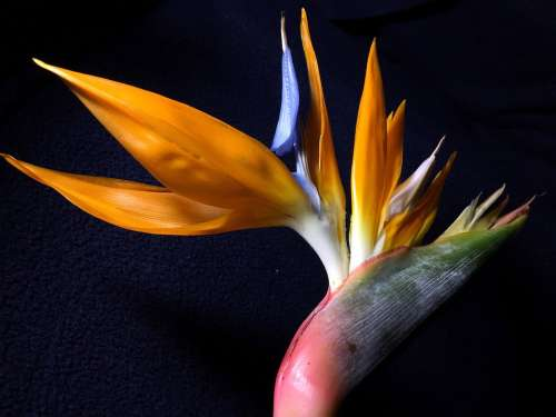 Flower Bird Exotic Colorful Flower Nature Plant