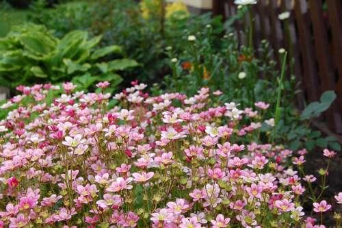 Flowers Garden Spring Pink