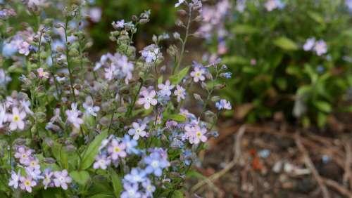 Flowers Nature Plants Petal Close