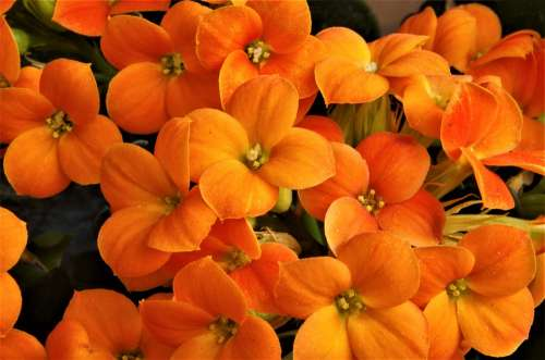 Flowers Orange Flowers Spring Summer Nature