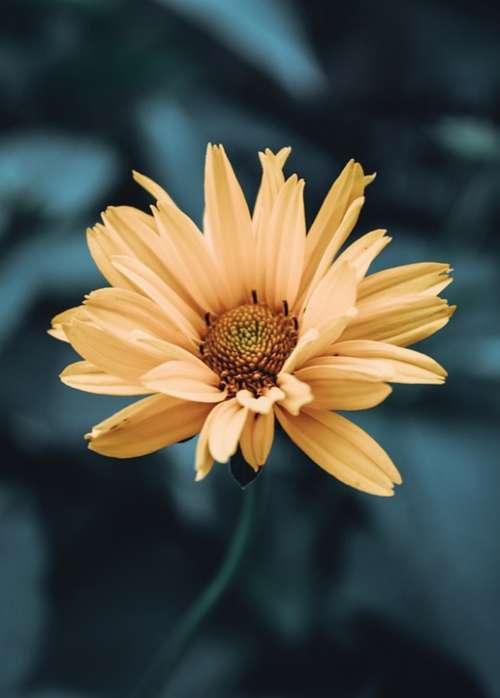 Flowers Flower Flora Garden Nature Beauty