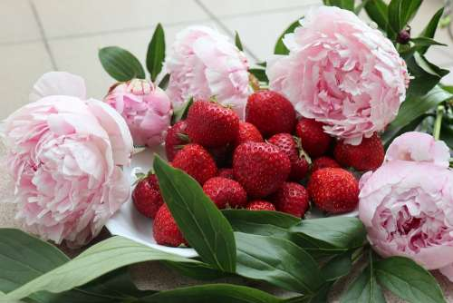 Flowers Peonies Fruit Strawberries The Smell Of