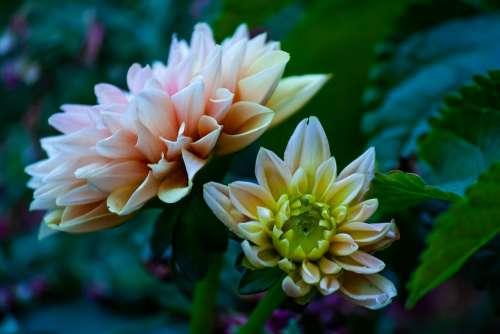 Flowers Blossom Plant Spring Decorative Flora