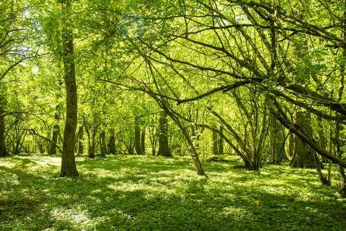 Forest Oak Trees Nature Tree Spring Landscapes